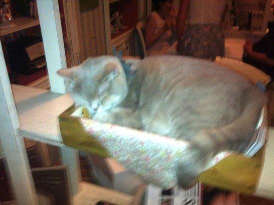 Mari Vanna: Знаменитый кот Мари-Ванны