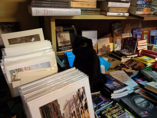 Libreria Acqua Alta: the lovely cat