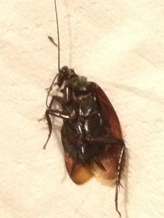 Port Wentworth, GA: Dead cockroach from the bed!!