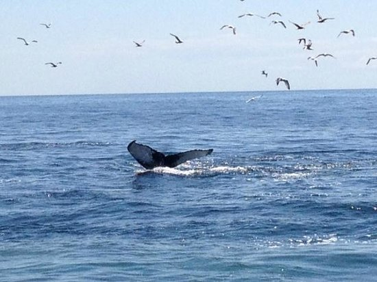 Hyannis Whale Watcher Cruises : Whale
