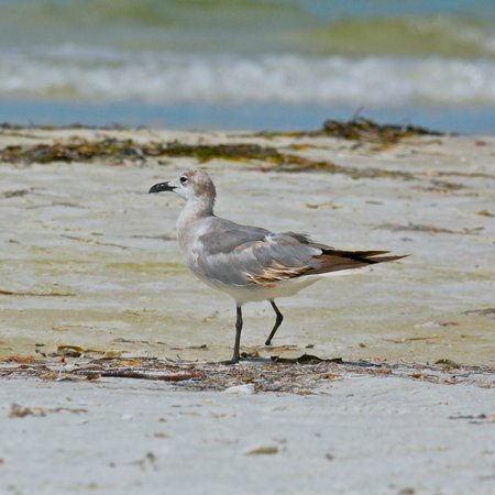 The Neptune Resort: poor little fellow - missing a foot - tied with fishing-line