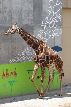 Asahiyama Zoo : かばさんのもぐもぐタイム