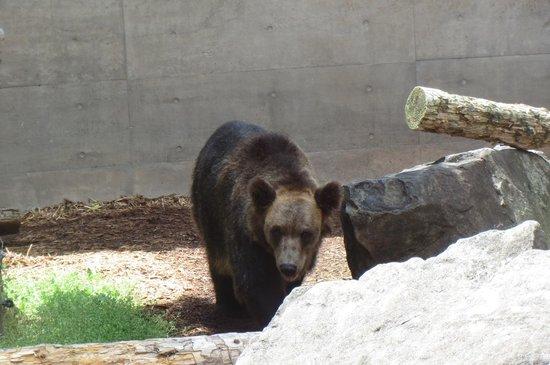 Asahiyama Zoo : 熊