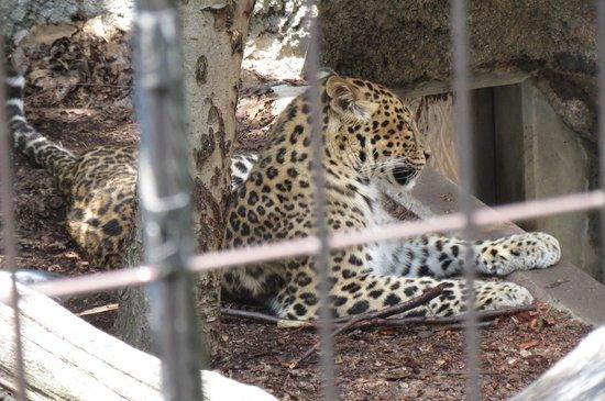 Asahiyama Zoo : ひょう