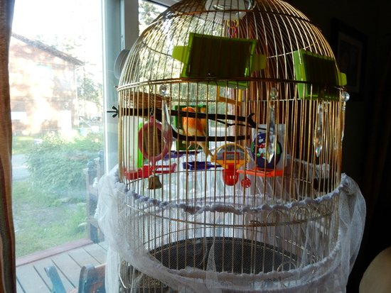 Billie's Backpackers Hostel : She also has a parrot!
