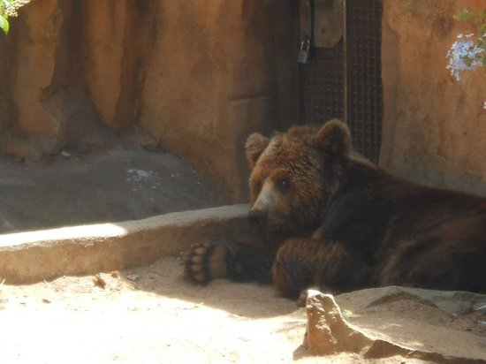 Zoo de Barcelona: Too hot for the bear, he's managed to find a shaded spot.