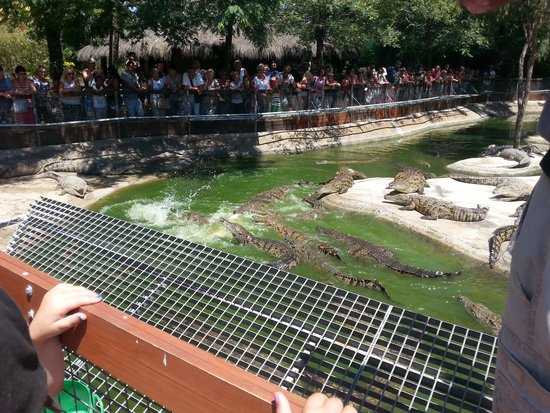 Crocodile Park: lunch!