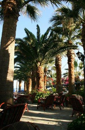 Palm Bay Hotel : Les palmiers