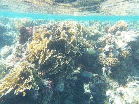 Concorde Moreen Beach Resort & Spa Marsa Alam : Barriera corallina