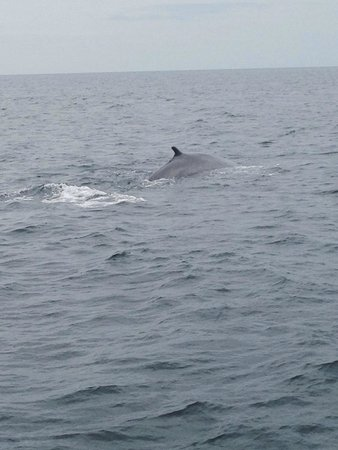Dolphin Fleet Whale Watch : First one we saw. Was really close!