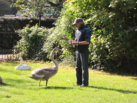 St. Stephen's Green: 2012- A lovely retired man used to visit/feed the cygnets daily