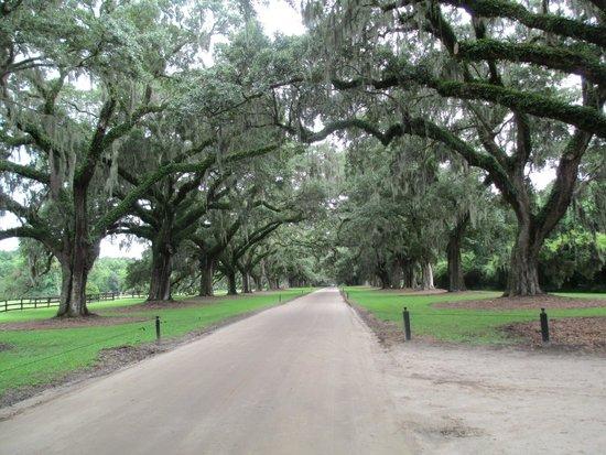Boone Hall Plantation : Avenue of the Oaks