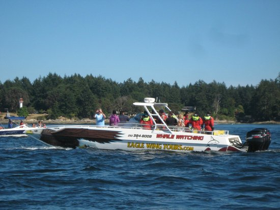 Eagle Wing Whale Watching Tours : Eagle Wing Tours