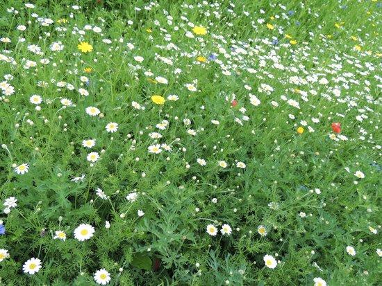 The Lost Gardens of Heligan: Giardino