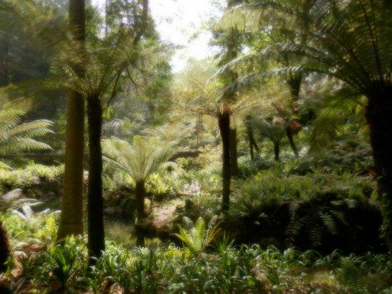Parque Nacional da Pena : helechos gigantes parque pena
