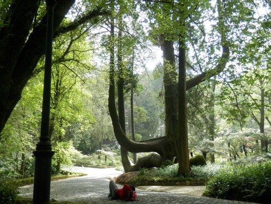 Parque Nacional da Pena : vista arbol parque pena