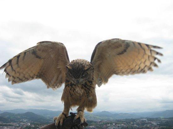 Monte Igueldo: Uilen en roofvogels
