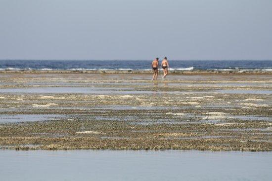 Elphistone Resort: mare con la bassa marea