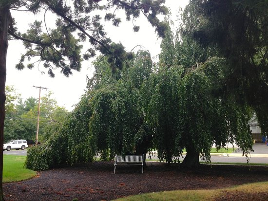 600 Main, A Bed & Breakfast and Victorian Tea Room : weeping mulberry at side of B & B