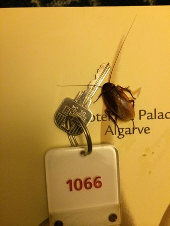Sensimar Falesia Atlántic: The kind of creatures you might find in your room
