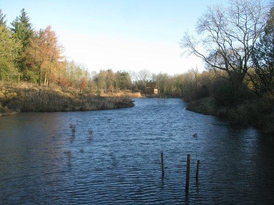 Foxglove Covert Local Nature Reserve: Lake