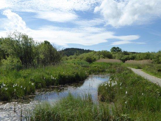 Foxglove Covert Local Nature Reserve: Scrapes