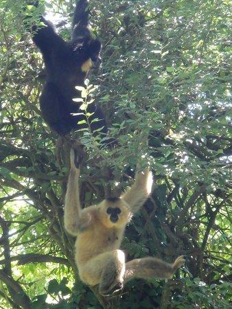 Bioparc de Doué la Fontaine : Zoo Doué