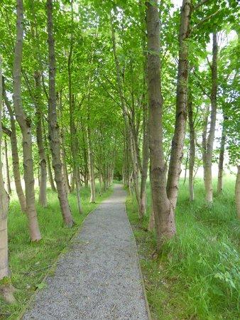 Foxglove Covert Local Nature Reserve: Sycamore Avenue