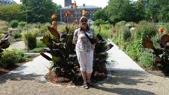 Botanical Gardens (Botanisk Have) : canna