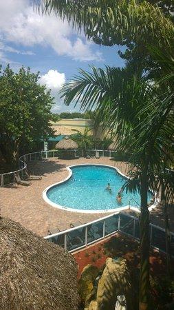 Universal Palms Hotel : Pool View