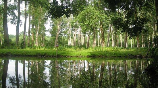 La Cabane de Sevre : venecia verde