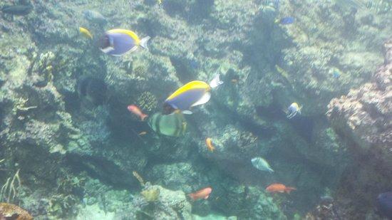 Aquarium Mare Nostrum: Les mers du sud comme si vous y étiez