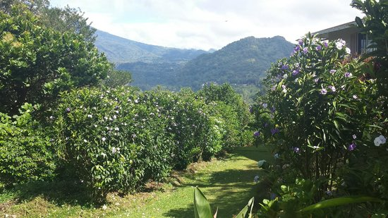 La Montana y el Valle Coffee Estate Inn : landscaping on the property