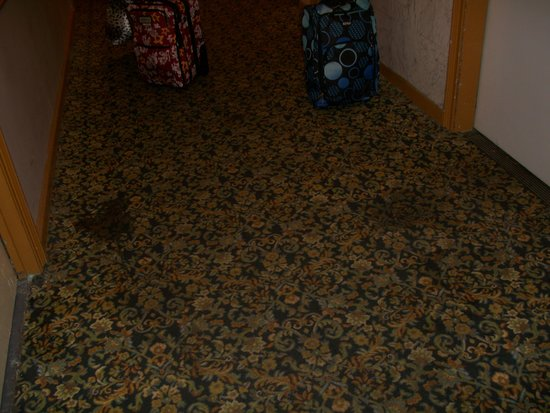 Hotel Carter : Stains on carpet near elevator