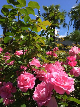 Du Lac et Du Parc Grand Resort: Beautiful roses everywhere
