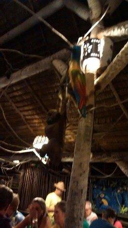 Cipo Brasil: Linda decoração!!!