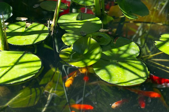 Hotel des Arceaux: Jardin - bassin zen