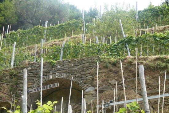 Footpath Monterosso - Vernazza: wijnranken op de flanken tussen Monterosso en Vernazza