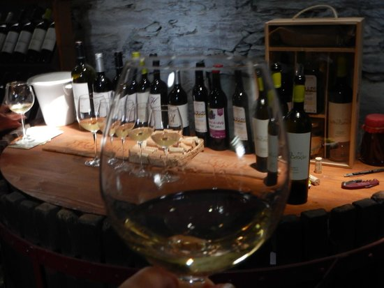 Cooltour Oporto: Olive Oil and Wine Tasting
