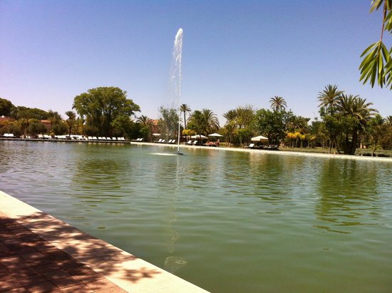 Pullman Marrakech Palmeraie Resort and Spa : Pond