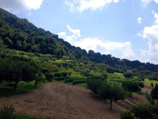 Aru Castagnu : L'orto perfettamente curato