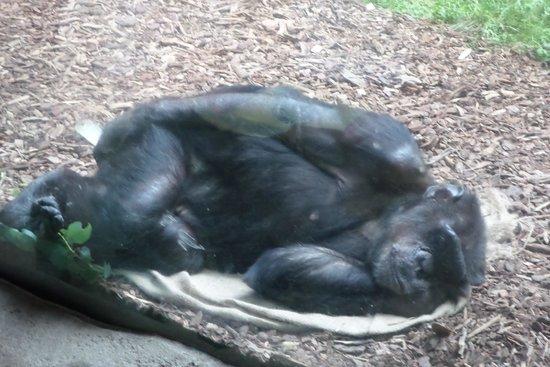 Zoologischer Garten Leipzig: friedvoll schlafend