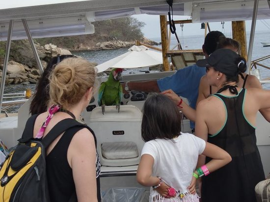 Vallarta Adventures: OMG ... there's a parrot on the boat (Las Caletas)