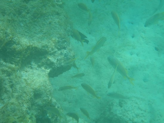 Tropical Sunset Beach Apartment Hotel: Just a few of the fish that you will see on the reef RIGHT off the beach!!