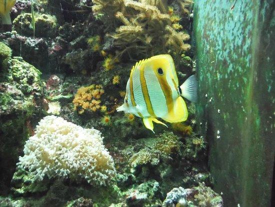 Shedd Aquarium : .