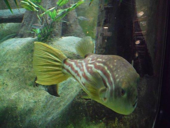 Shedd Aquarium: .