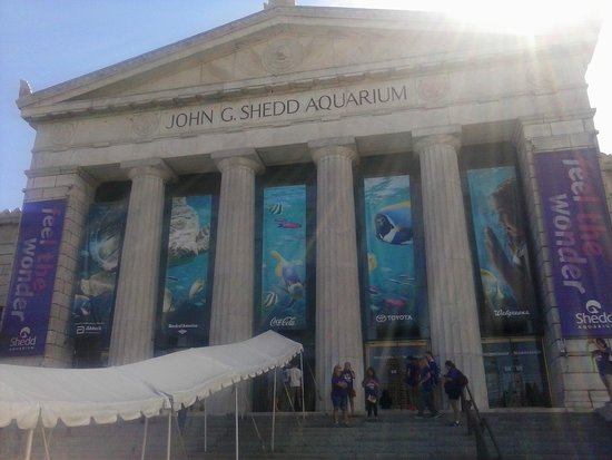 Shedd Aquarium : Front of the building