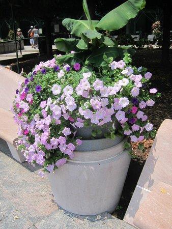 National Gallery of Art - Sculpture Garden: Flower Pot