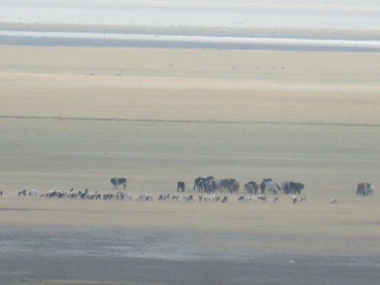 Manyara Wildlife Safari Camp: masai herd