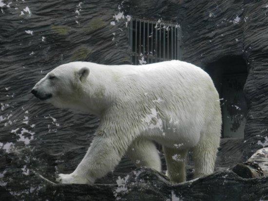 Prague Zoo: White Bear